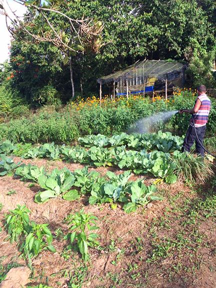 Farming at Siembra Tres Vidas in Aibonito, Puerto Ric